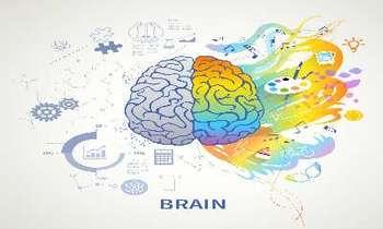 Критический период развития мозга
